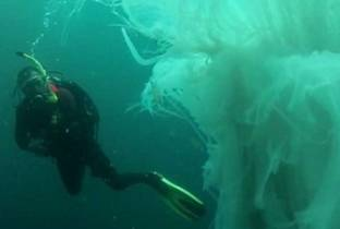 Sub si immerge nelle acque del Messico e si trova davanti una creatura mostruosa. Video
